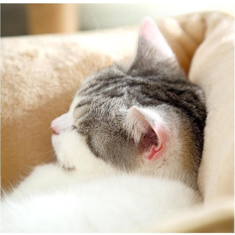 ペットベッド 猫ベッド 冬用 犬ベッド あったか ペット用 クッション 保温防寒 崩れにくい 小型犬 猫用ふわふわ 暖かい キャットハウス 34*34*23 送料無料|panni-fashion|10