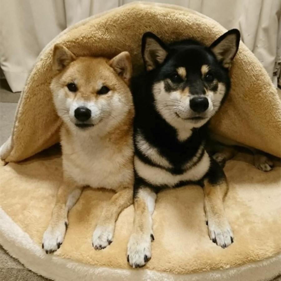 ペット ベッド 犬用 ベッド クッション ベッドクッション 柴犬 大人気 もこもこ ふわふわ 柔らかい 月3日再入荷 防寒保温 送料無料|panni-fashion|05