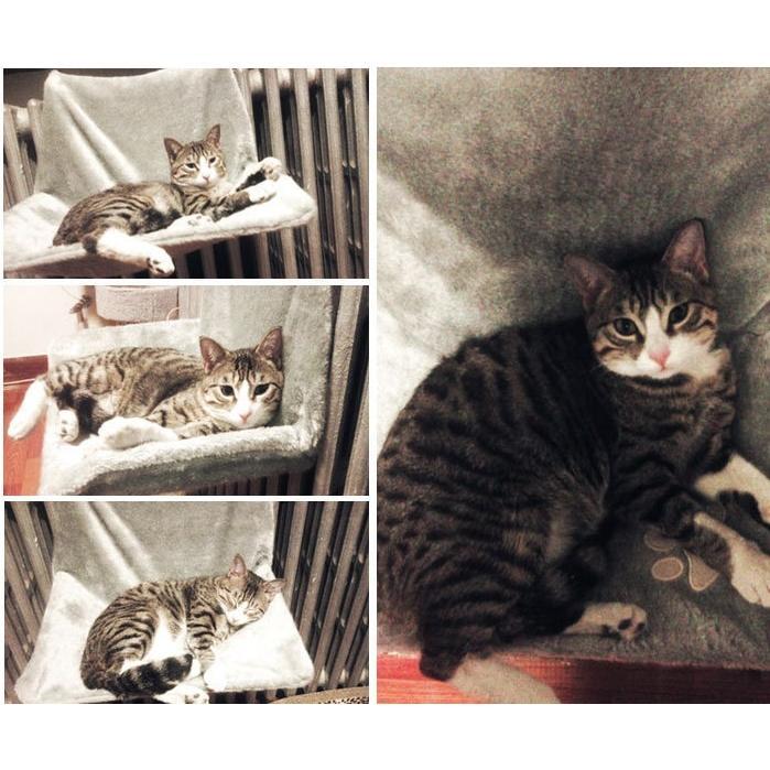 ペット ハンモック 猫 ねこ ネコ お昼寝 ベッド マット 手すりや椅子にワイヤーフックで引っかけるタイプ|panni123|07