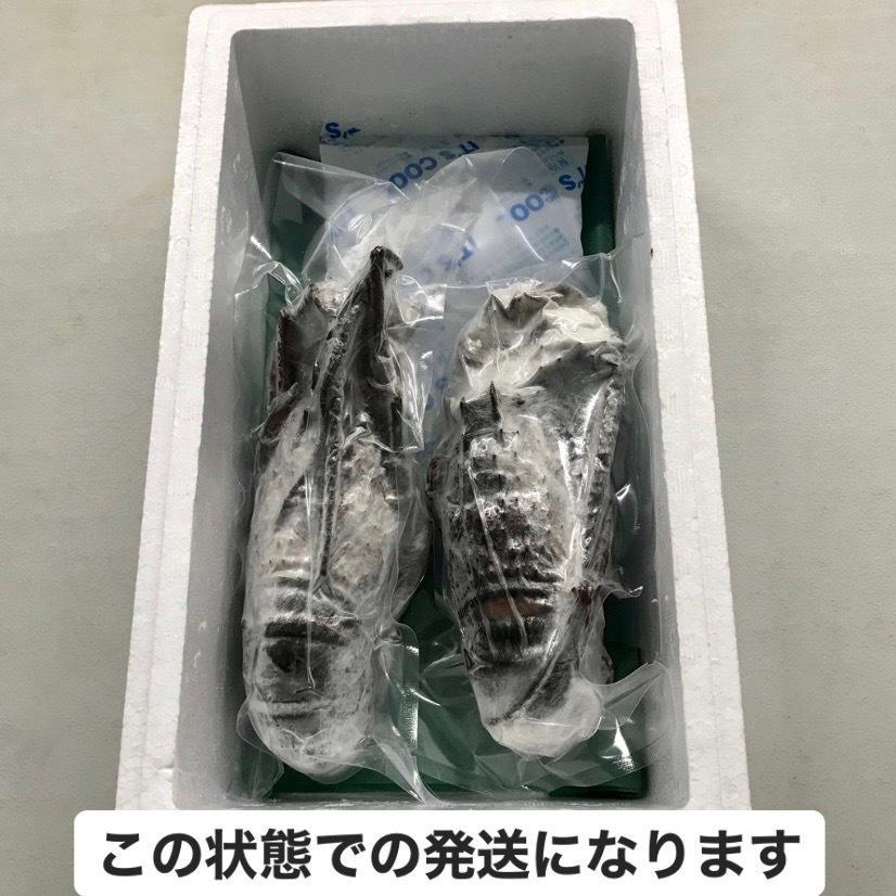 冷凍伊勢海老2尾(総量約450g) /【伊勢えび いせえび イセエビ】|pearlshokuhinten|06