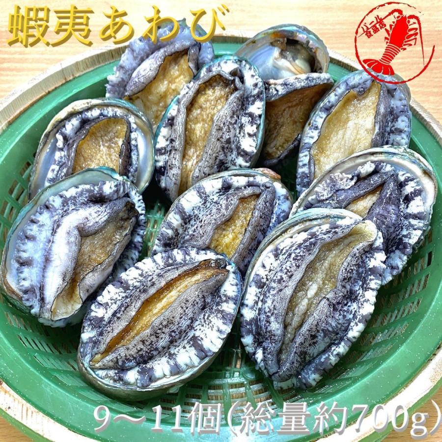 (活)蝦夷あわび(9~11個)総量約700g /【鮑 あわび アワビ】|pearlshokuhinten