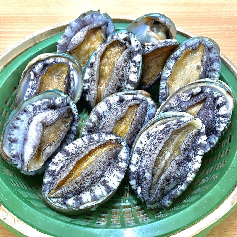 活蝦夷鮑700g分(9~11個)大あさり1.2kg分(8~10個)大満足2種の貝セット /【あわび アワビ 大アサリ】 pearlshokuhinten 02
