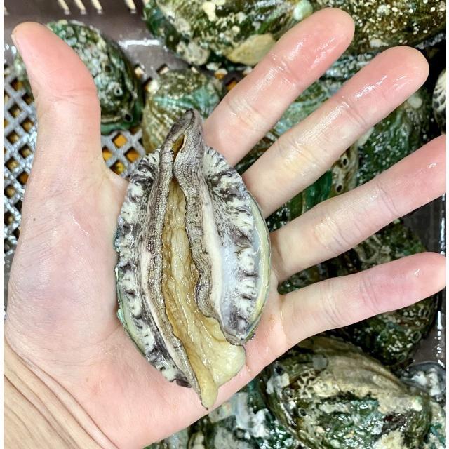 活蝦夷鮑700g分(9~11個)大あさり1.2kg分(8~10個)大満足2種の貝セット /【あわび アワビ 大アサリ】 pearlshokuhinten 04