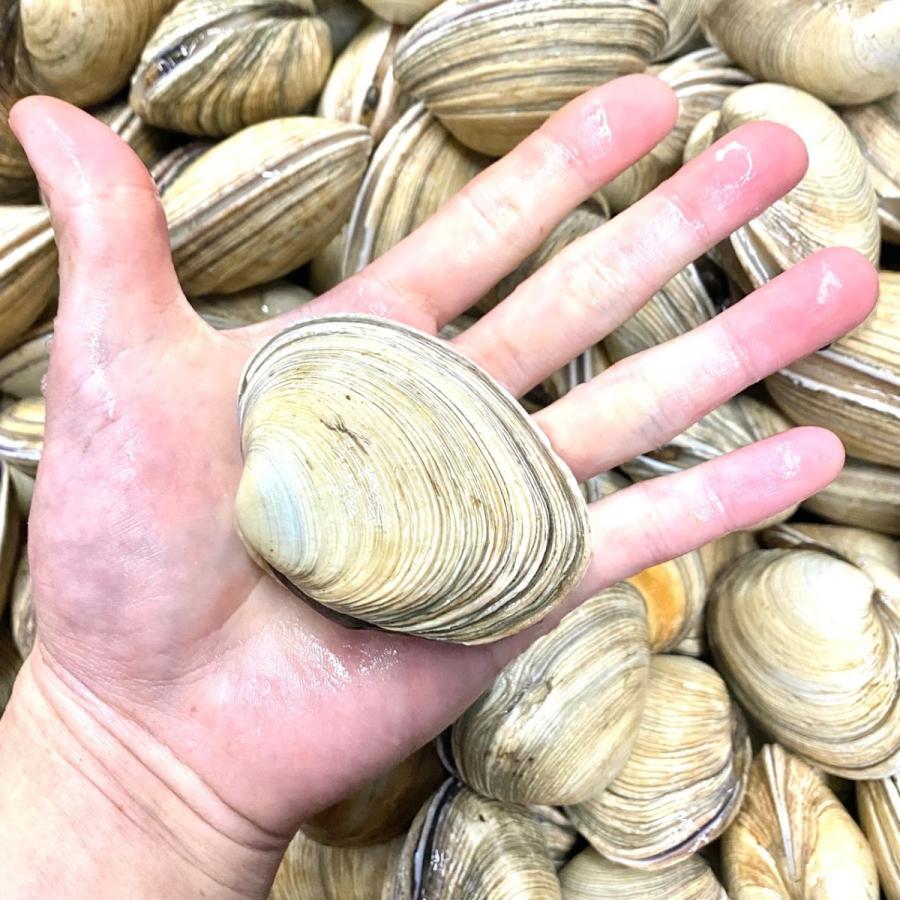 活蝦夷鮑700g分(9~11個)大あさり1.2kg分(8~10個)大満足2種の貝セット /【あわび アワビ 大アサリ】 pearlshokuhinten 05