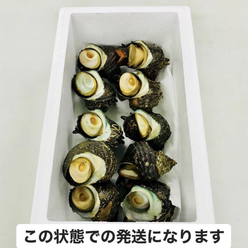 さざえ9〜11個(総量約850g) /【サザエ】|pearlshokuhinten|02