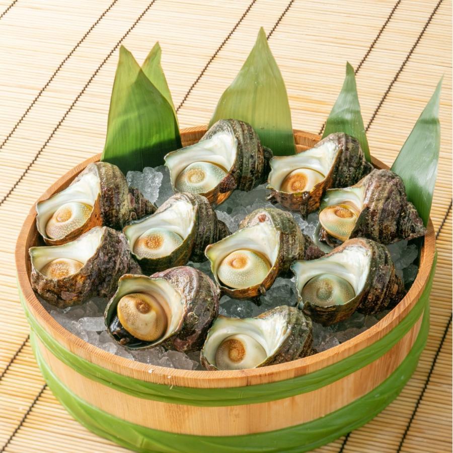 ヒオウギ貝10個、さざえ9~11個(総量約850g)絶品2種の貝セット /【アッパ貝 日の出貝 サザエ】|pearlshokuhinten|02