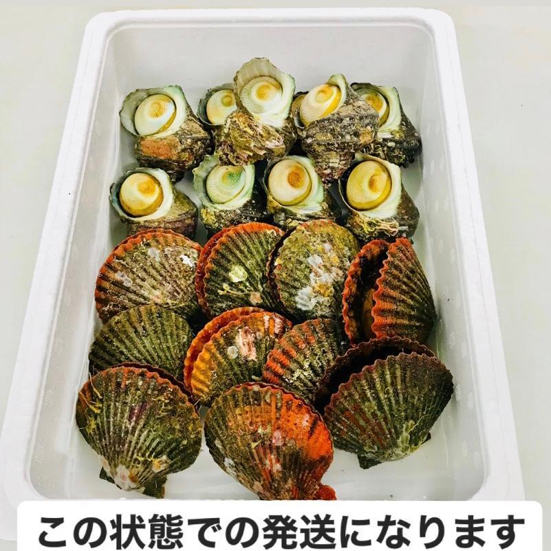 ヒオウギ貝10個、さざえ9~11個(総量約850g)絶品2種の貝セット /【アッパ貝 日の出貝 サザエ】|pearlshokuhinten|04