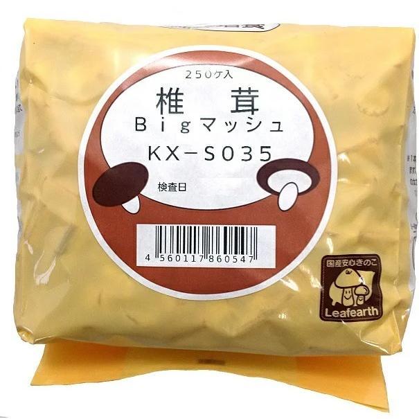 しいたけ 駒菌 ビッグマッシュ 250個 種菌 菌床 椎茸 キノコ 大型 肉厚 しいたけステーキにどうぞ|pegmarket|03