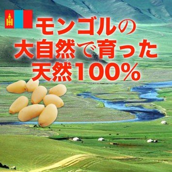 松の実300g モンゴル産松の実 天然 再入荷|pejapan|03