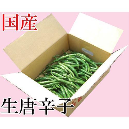 国産 生 青唐辛子 辛口 500g 生鮮品 千葉県産|pepperfriends