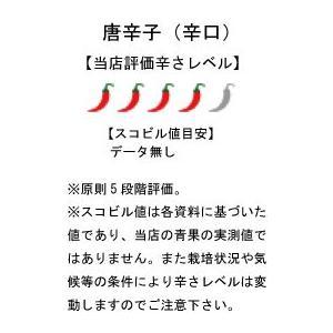 国産 生 青唐辛子 辛口 500g 生鮮品 千葉県産|pepperfriends|02