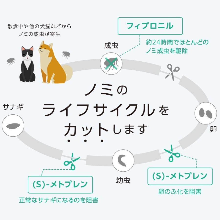 【10%OFFクーポン】【ネコポス(同梱不可)】ベッツワン キャットプロテクトプラス 猫用 6本 (動物用医薬品)|petgo|03