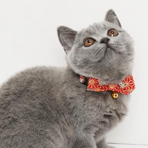 ネコ 首輪 麻の葉 招き猫柄 迷子札付き仕様  セーフティーバックル 鈴 和柄 かわいい petgp 05