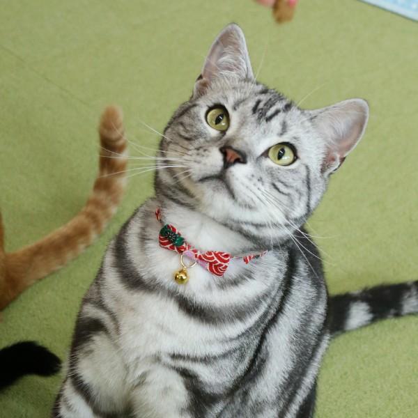 ネコ用首輪 結 (雅 みやび)「鈴付き仕様」 petgp 04