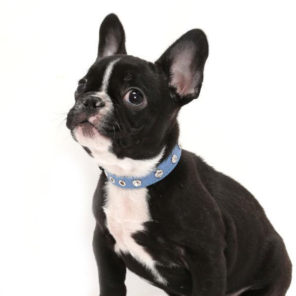 犬用首輪 デニムダイヤ <Sサイズ> ラインストーン 小型犬  中型犬 犬首輪|petgp|05