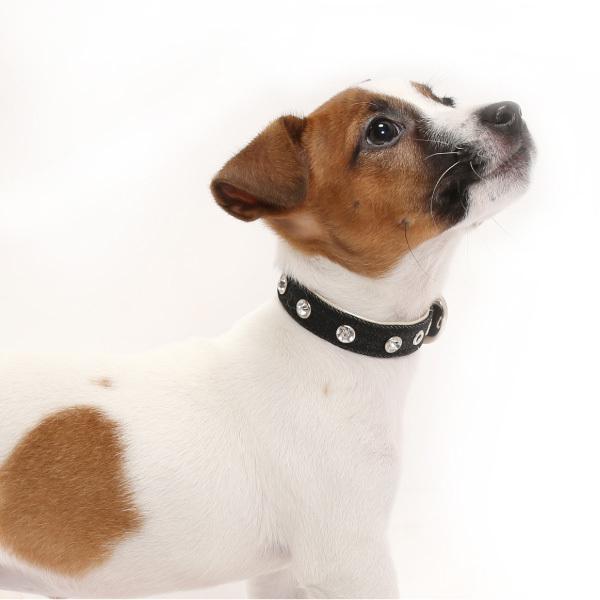 犬用首輪 デニムダイヤ <Sサイズ> ラインストーン 小型犬  中型犬 犬首輪|petgp|07