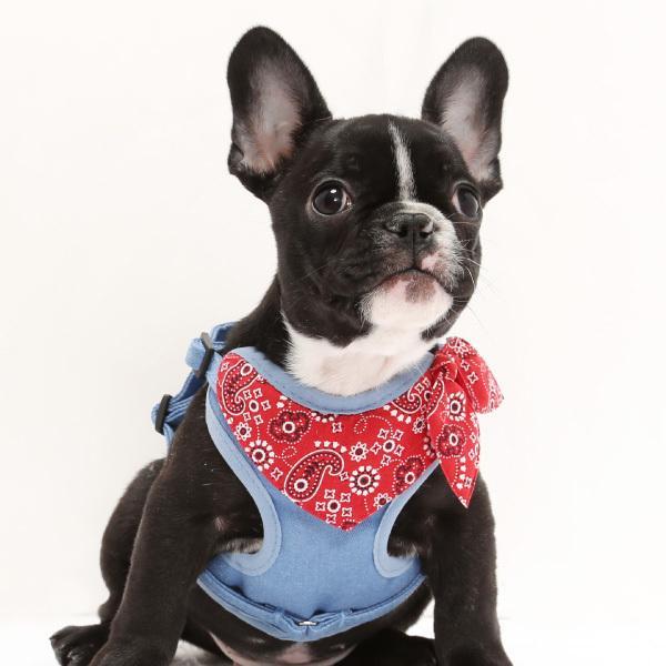 犬用 ハーネス ペイズリーバンダナ  <単品><1号サイズ/ 2号サイズ> 小型犬  犬 ハーネス デニム petgp 04