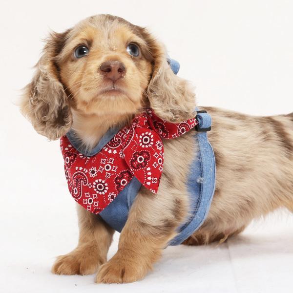 犬用 ハーネス ペイズリーバンダナ  <単品><1号サイズ/ 2号サイズ> 小型犬  犬 ハーネス デニム petgp 05
