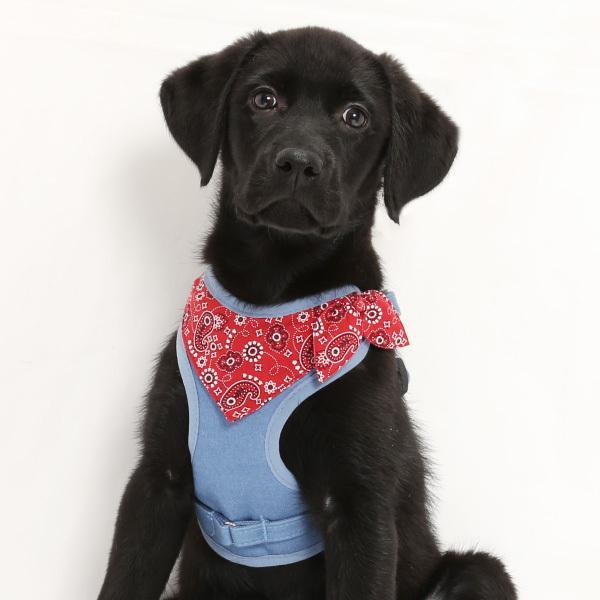 犬用 ハーネス ペイズリーバンダナ  <単品><1号サイズ/ 2号サイズ> 小型犬  犬 ハーネス デニム petgp 06
