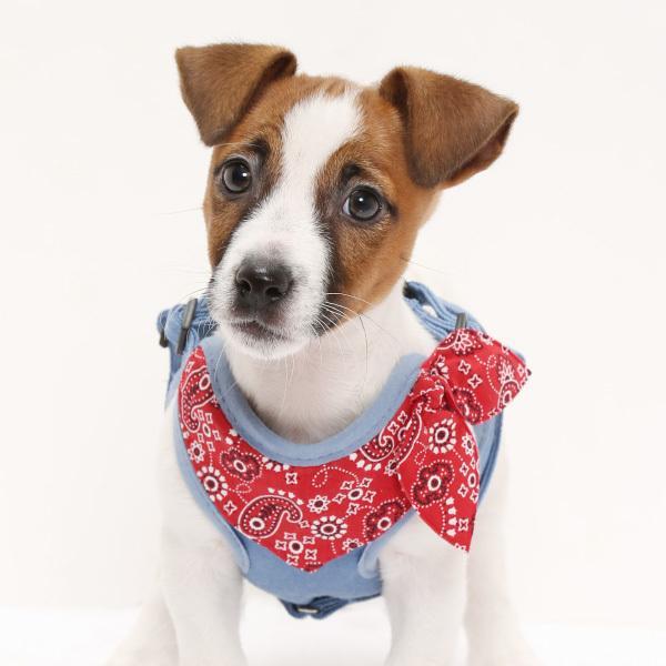 犬用 ハーネス ペイズリーバンダナ  <単品><1号サイズ/ 2号サイズ> 小型犬  犬 ハーネス デニム petgp 07