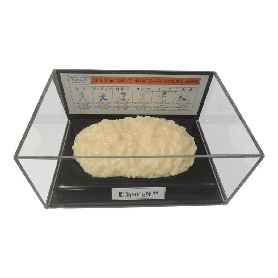 【日時指定可】脂肪模型フィギュアケース入 500g IP-977