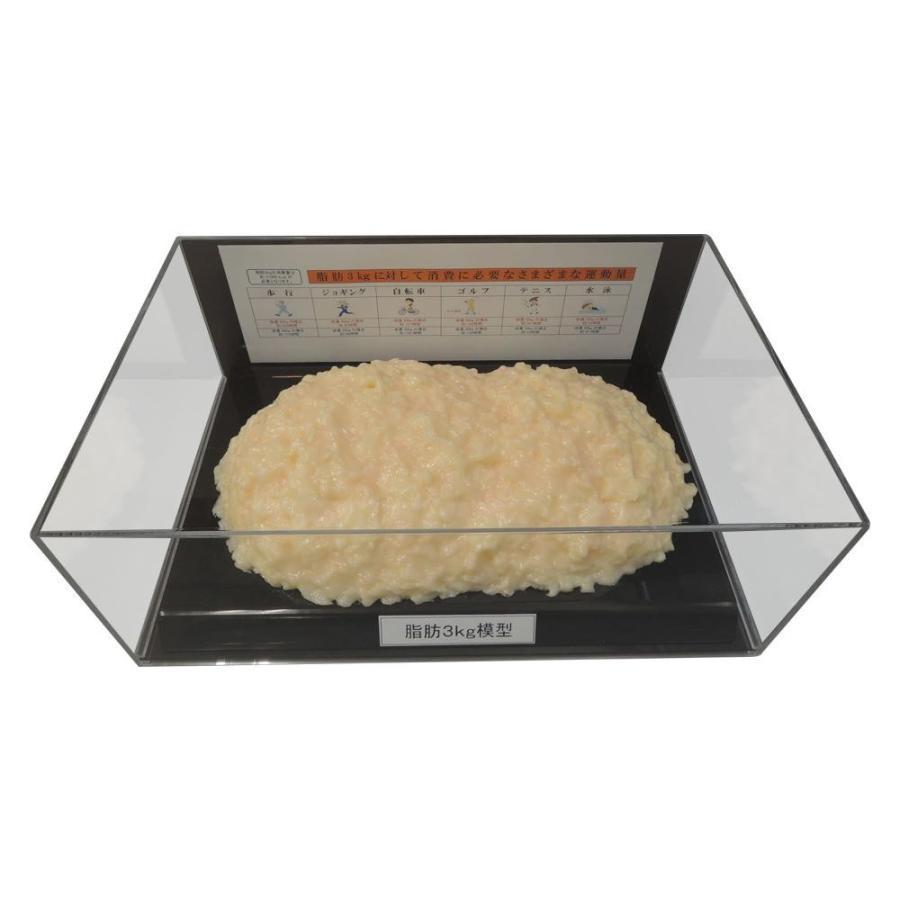 【日時指定可】脂肪模型フィギュアケース入 3kg IP-980