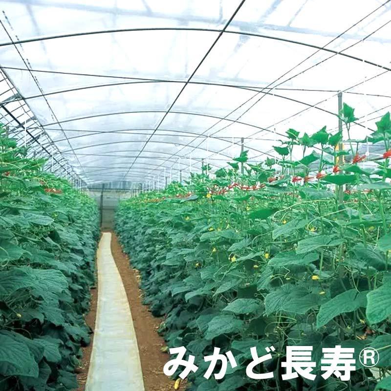 0.05mm厚 420cm幅 100m みかど長寿 50A 雨よけハウスカーテン用 農PO 透明 カ施【代引不可】