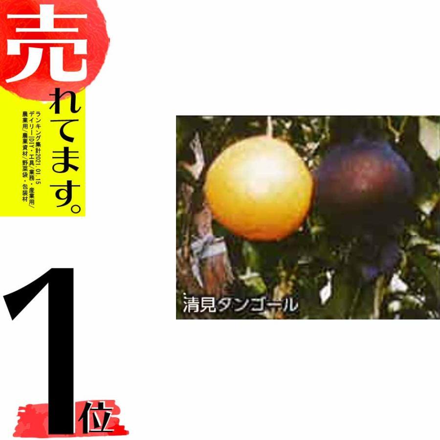 【2800枚】 果実袋 サンテ S-6 18cm 黒 ミカンの日焼防止・着色促進・樹上越冬など みかん 石川殖産 D