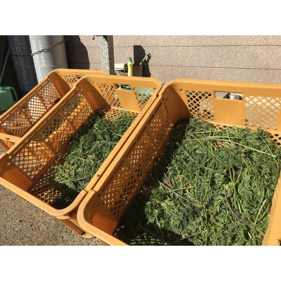 ペットのおやつに 無農薬!人参の葉40g (乾燥)|ponpokomura-kisarazu