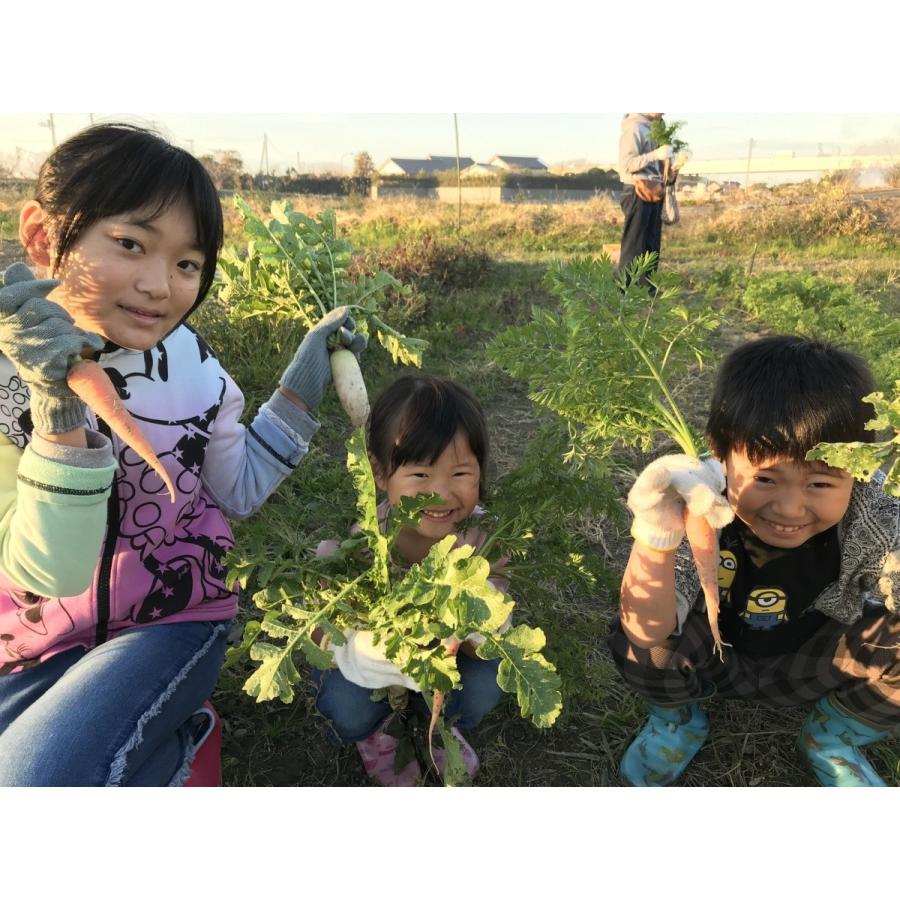 ペットのおやつに 無農薬!人参の葉40g (乾燥)|ponpokomura-kisarazu|04