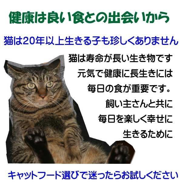 国産 無添加 愛猫の健康を考えた キャットフード【 ねこのまんま 】 800g3個セット 高たんぱく 低脂肪 グルテンフリー ドライフード 全年齢対応|potitamaya-y|06