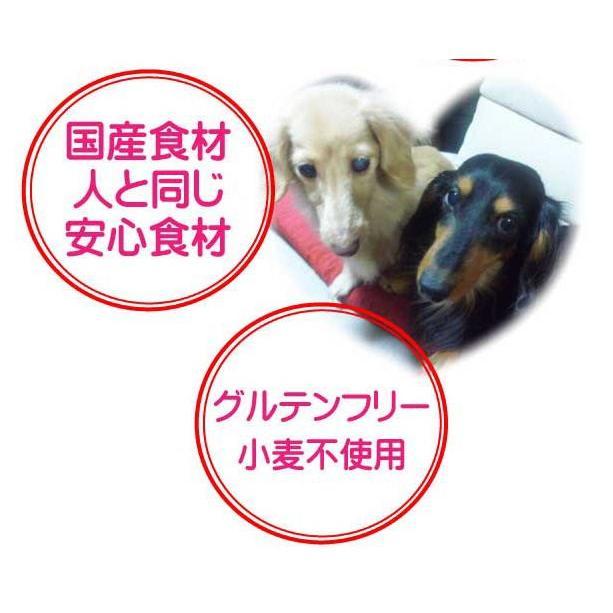 国産 無添加 自然食 健康 こだわり食材  【 お米のドッグフード 】 馬肉タイプ 2.5kg 2個セット (5kg)  ドックフード (犬用全年齢対応) potitamaya-y 07