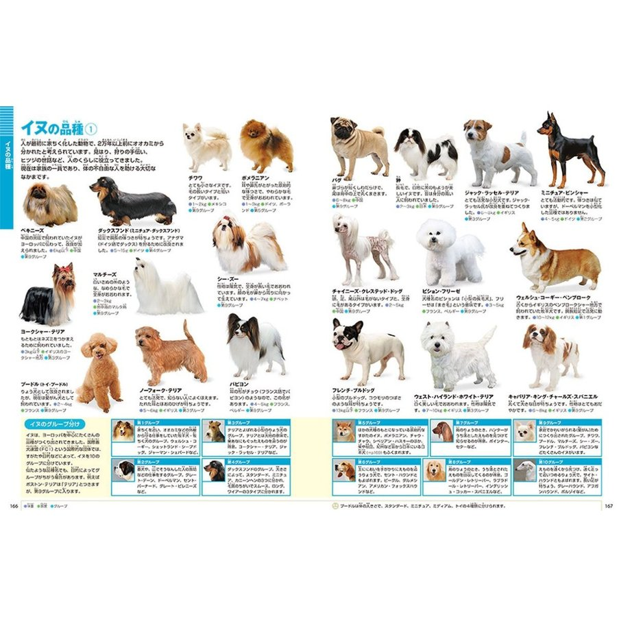 DVD付 新版 動物 (小学館の図鑑 NEO)|premium-direct|04