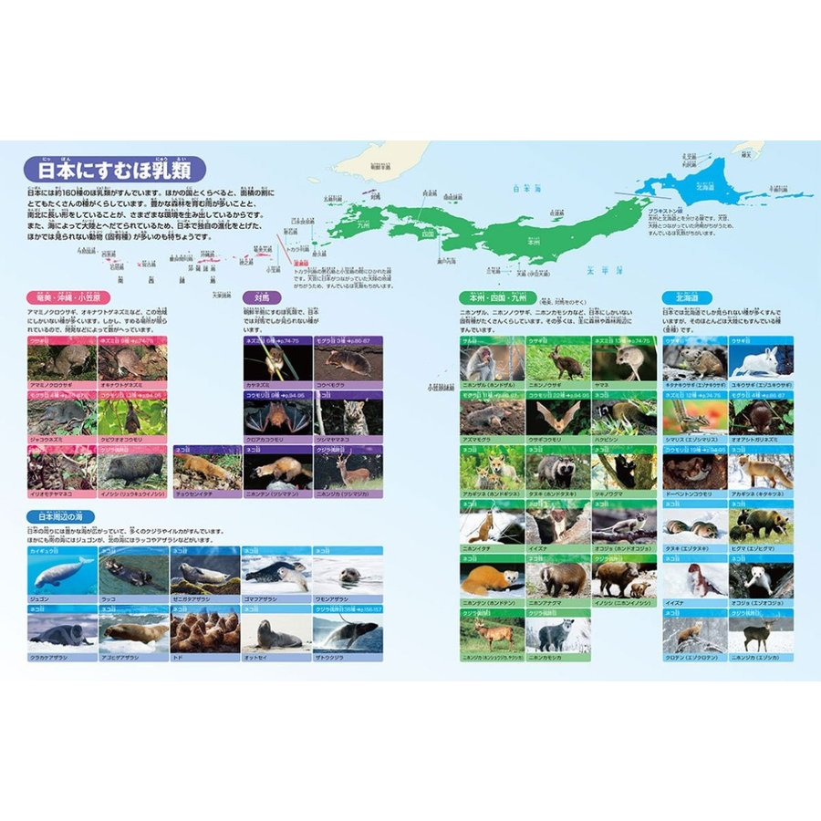 DVD付 新版 動物 (小学館の図鑑 NEO)|premium-direct|05