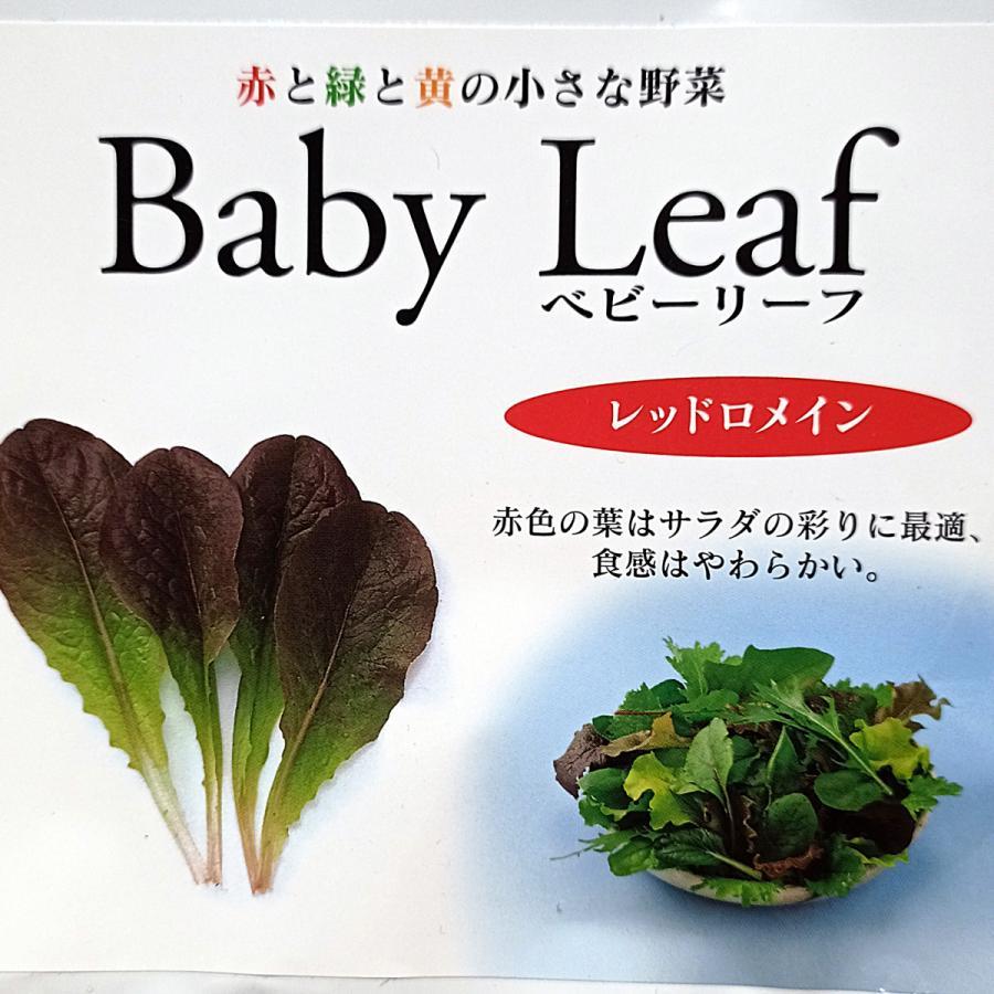 ベビーリーフ種子 B-06 レッドロメイン 2.5ml|printstudio-jp|02