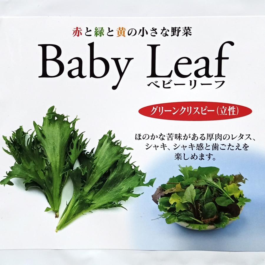 ベビーリーフ種子 B-16 グリーンクリスピー(立性) 1ml|printstudio-jp|02