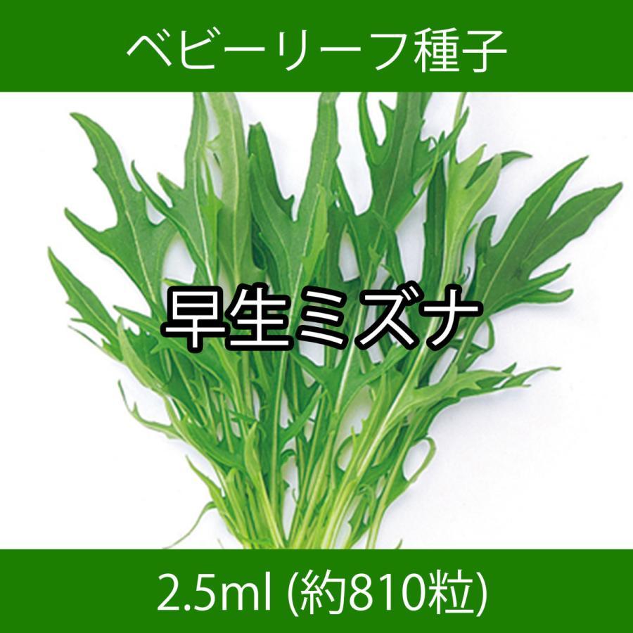 ベビーリーフ種子 B-18 早生ミズナ 2.5ml printstudio-jp