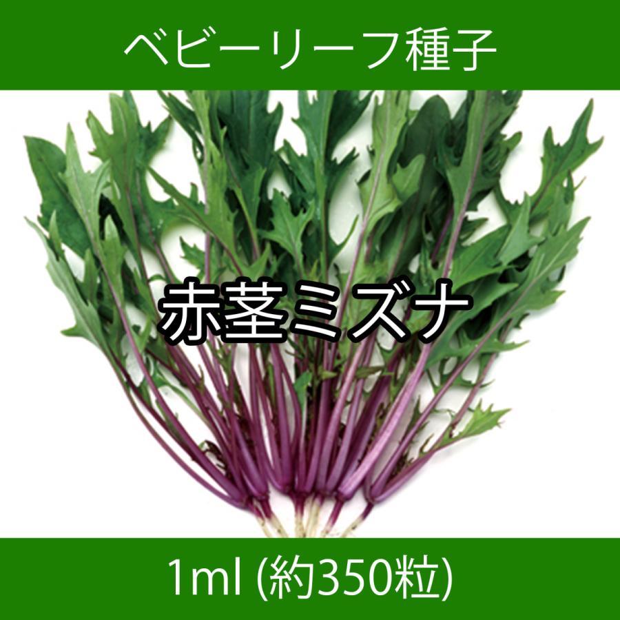 ベビーリーフ種子 B-20 赤茎ミズナ 1ml printstudio-jp