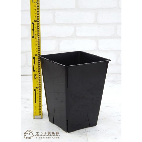 のびのび育つ 『 スリット鉢 スクエア 』 6号角型|produce87|03