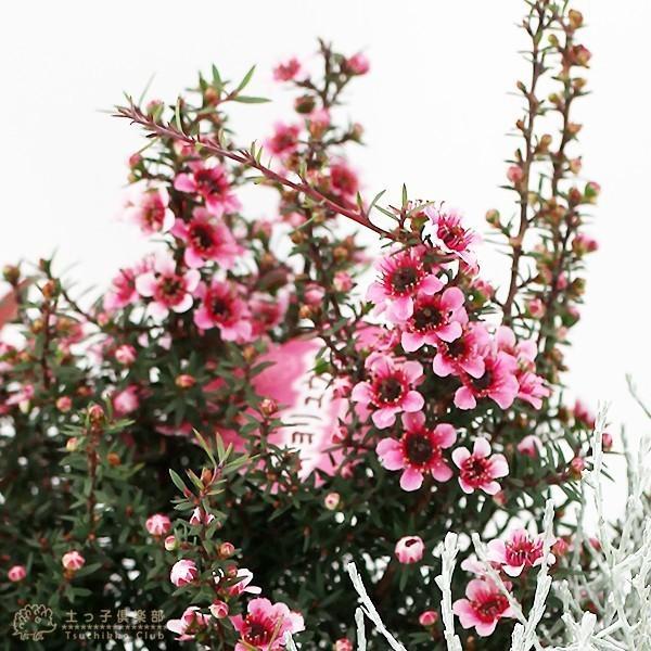 選べる門松『 お正月寄せ植え 』 (正月飾り 玄関などに) 門松アレンジ寄せ植え 7号鉢植え 単品( 送料無料 ) produce87 13