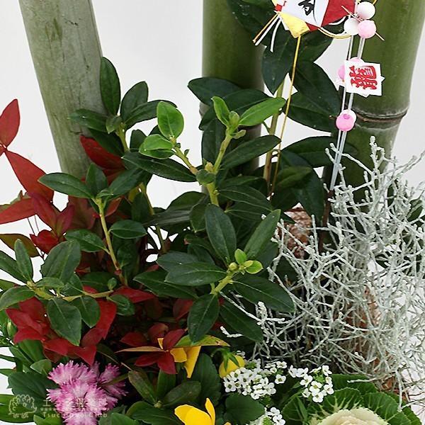 選べる門松『 お正月寄せ植え 』 (正月飾り 玄関などに) 門松アレンジ寄せ植え 7号鉢植え 単品( 送料無料 ) produce87 14