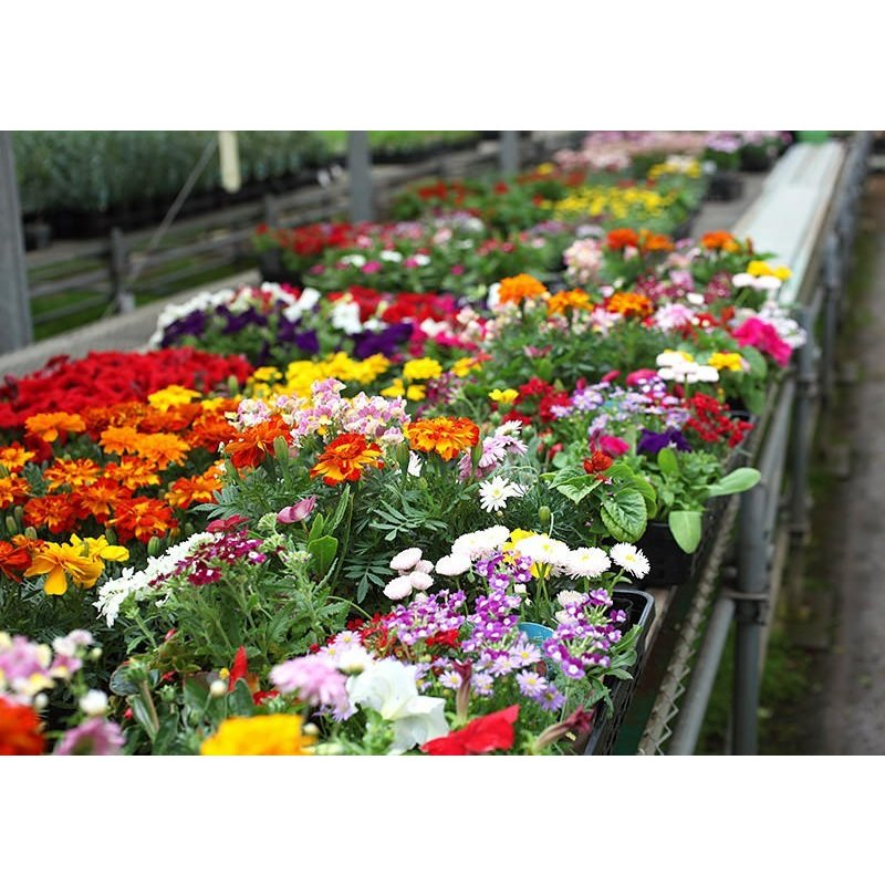 春夏の花苗 24個セット ( 送料無料 )|produce87|03