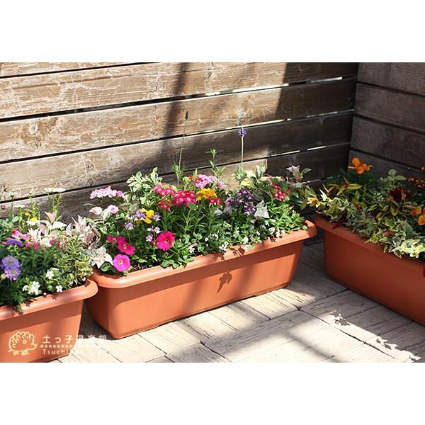春夏の花苗 24個セット ( 送料無料 )|produce87|05