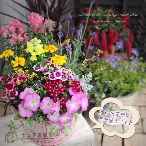 春夏の花苗 24個セット ( 送料無料 )|produce87|07