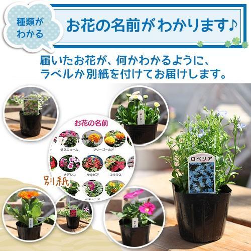 春夏の花苗 24個セット ( 送料無料 )|produce87|08