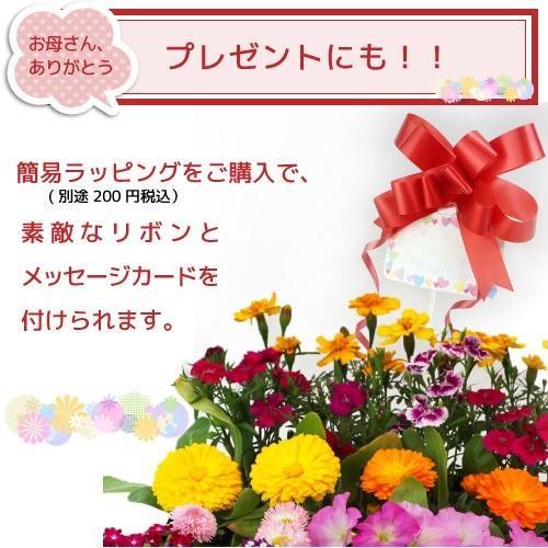 春夏の花苗 24個セット ( 送料無料 )|produce87|09