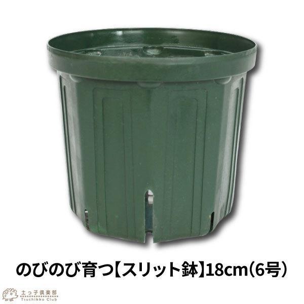 のびのび育つ 『 スリット鉢 』 18cm (6号) produce87