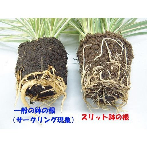 のびのび育つ 『 スリット鉢 』 18cm (6号) produce87 05