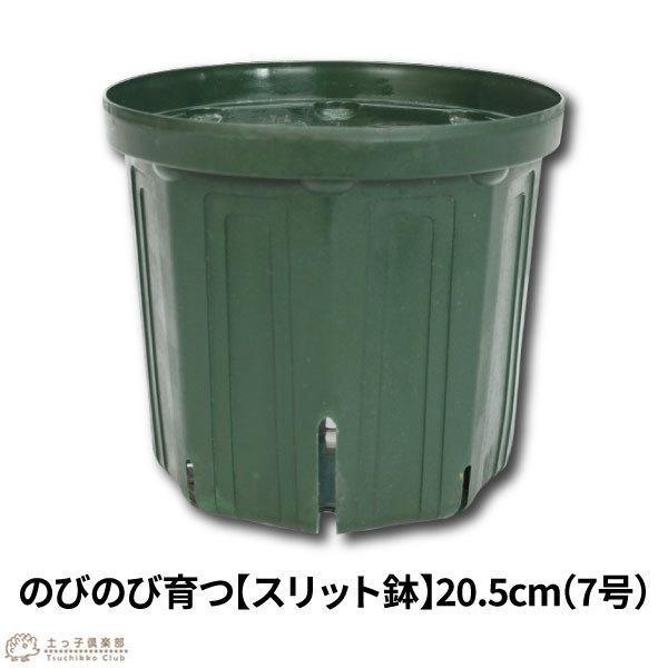 のびのび育つ 『 スリット鉢 』 20.5cm (7号)|produce87