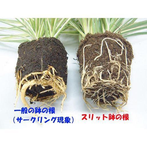 のびのび育つ 『 スリット鉢 』 20.5cm (7号)|produce87|05